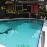 Villa Ciloto Puncak Kolam Renang Pribadi