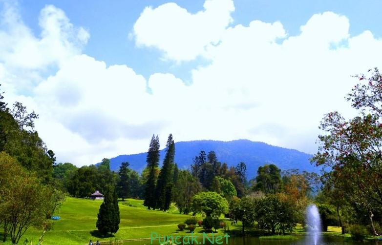 Tempat Wisata Bogor Kebun Raya Cibodas
